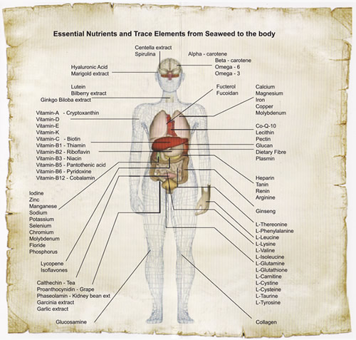 Essential Nutritions and Trace Elements from Seaweed to the Body